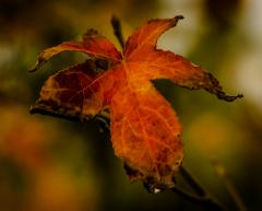 Autumn Colour - Alan Sutton