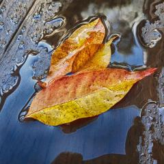 Autumn Leaves (3rd place) - Carol Abbott