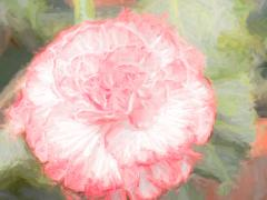 Camellia with a Touch of Cezanne - Elaine Seaver