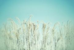 Grass and sky - Jan Glover