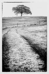 Lone tree - Jennifer Gordon