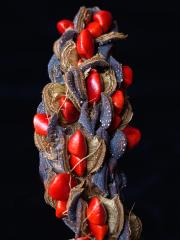 Magnolia seed pod - Heather Miles
