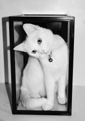 Puss in a box - Beryl Jenkins