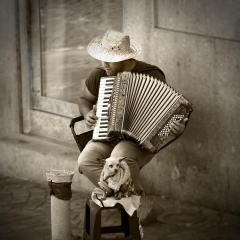 The Accordianist - Alison Seccombe