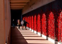 Wall of poppies - Guy Machan