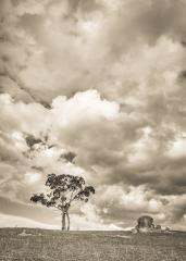 lone tree - David Hipsley